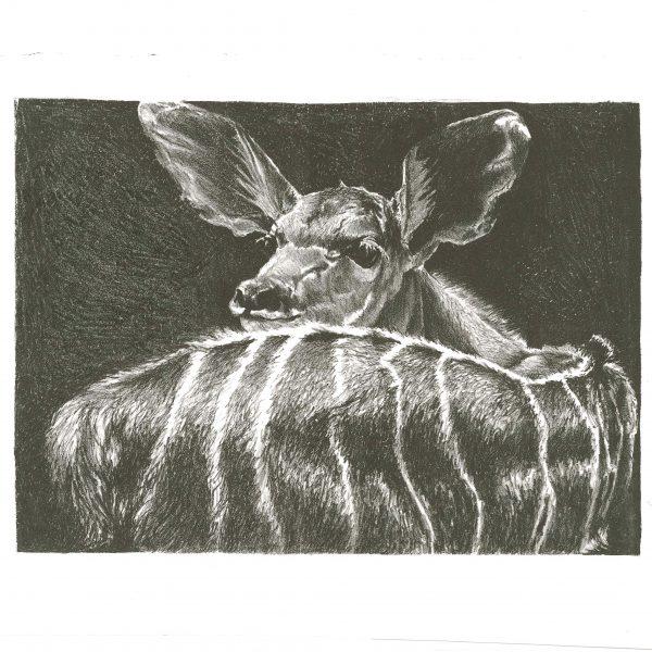 deer-dark-bkgnd-14-25-x-18-5-min-min
