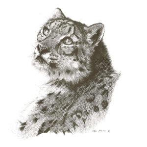 jaguar-min-min