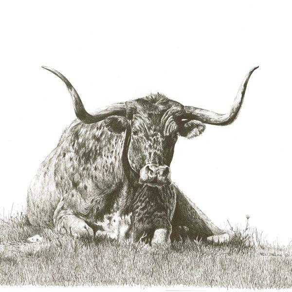 longhorned-bull-laying-down-20-x-15-min-min