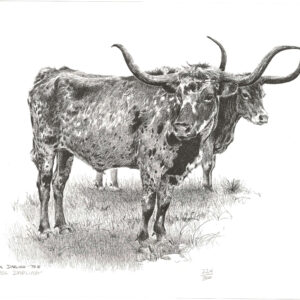 longhorned-bulls-18-x-13-min-min