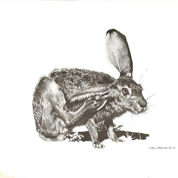 rabbit-20-x-15-min