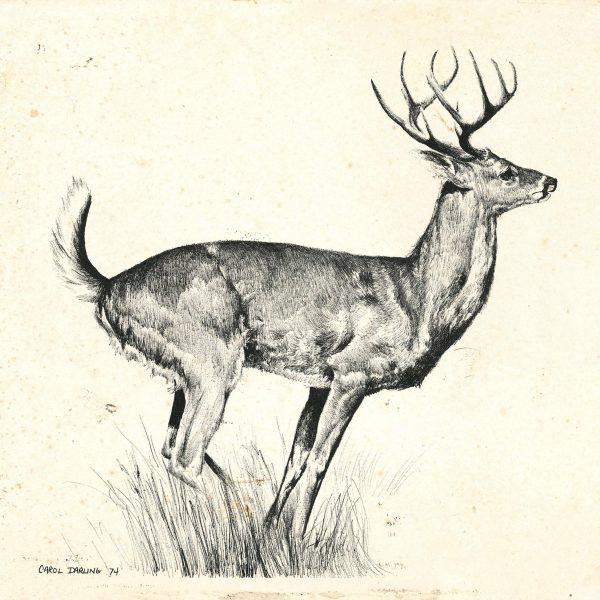 stag-profile-min