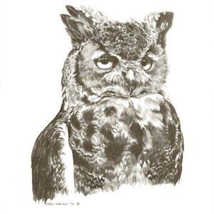 wise-owl-15-x-20-min-min