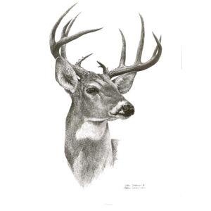 buck-head